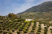 スペイン アンダルシア オリーブ畑と白い家