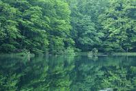 青森県 八甲田山 蔦温泉 菅沼と蔦野鳥の森
