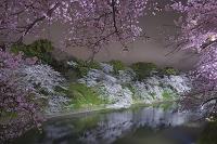 宮城県 東京都 千鳥ヶ淵 夜桜