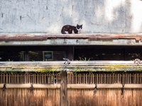 庇の上の猫
