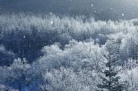 北海道 狩勝峠の霧氷と降雪