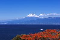 静岡県 大瀬崎付近より富士山