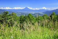 山梨県 ススキ咲く富士見平より甲府盆地と富士山 八ヶ岳観音平