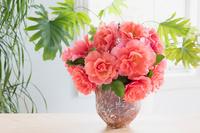 バラの花 サンセットグロウ