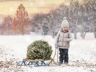 クリスマスツリーを運ぶ子供
