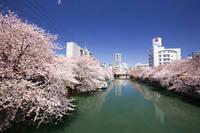 神奈川県 大岡川