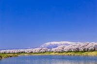 宮城県 白石川堤一目千本桜と蔵王連峰