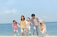 砂浜を走る犬と日本人家族