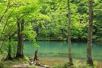 山形県 新緑のドッコ沼 蔵王