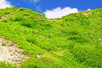 岐阜県 夏の弓折岳