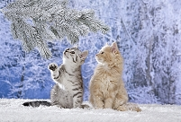 雪の中の2匹の子猫