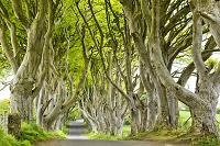 イギリス 北アイルランド 春の並木道
