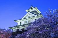 滋賀県 長浜城とサクラ 夜景