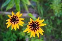 乗鞍高原の花