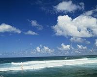 マウイ島 ハワイ ウィンドサーフィン
