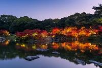 香川県 栗林公園 ライトアップ