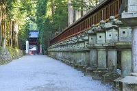 栃木県 日光二荒山神社 上新道の石灯籠