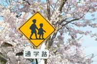 西柴桜道の桜並木