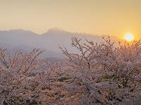 山梨県 桜と南アルプス(甲斐駒ヶ岳)夕日