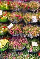 ドイツ フランクフルト 花屋のチューリップ