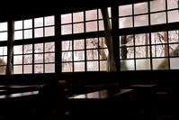 長野県 杵原学校のシダレザクラ