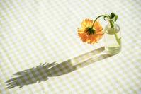 テーブルクロスと花瓶