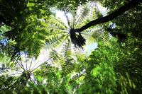 東京都 小笠原諸島 母島 石門のマルハチの森
