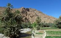 モロッコ ティネリールのオアシス 水路と畑