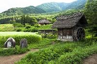 長野県 安曇野市 蕎麦畑