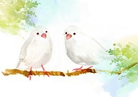 水彩画 文鳥