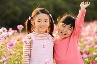 コスモス畑の日本人の子供