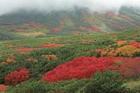 北海道 裾合平の紅葉