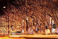 東京都 表参道ケヤキ並木のイルミネーション