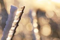 長野県 長和町 美ヶ原 朝の輝く雨氷