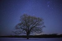 北海道 星空と雪原のハルニレ