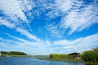 千葉県 印旛沼 伝統漁法と小屋