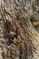 山梨県, カブトムシとオオムラサキとスズメバチ