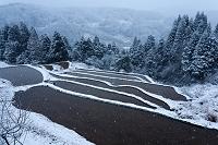 島根県 雲南市 雪降る棚田