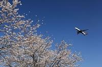 桜とボーイング767 デルタ航空