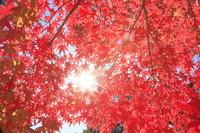 岩手県 紅葉と太陽