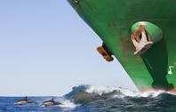船とイルカ