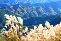 奈良県 曽爾村 ススキと山並