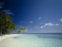 モルディブ ヤシのある南の島