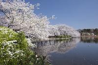東京都 上野恩賜公園