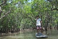 奄美大島 スタンドアップパドルサーフィンとマングローブの森