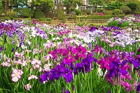 東京都 堀切菖蒲園