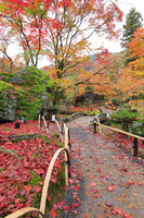 京都府 宝厳院 獅子吼の庭の紅葉と嵐山