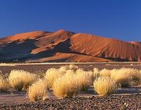 ナミビア ナミブ砂漠 砂丘 夕方 ナミブ・ナウクルフト公園