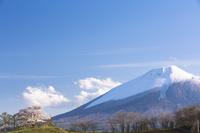 岩手県 為内の一本桜