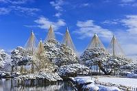 石川県 兼六園雪吊り